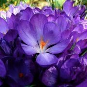 FlowerRecord