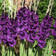 Purple Flora 3