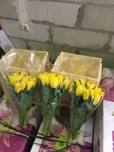 Наша выгонка тюльпана 2018