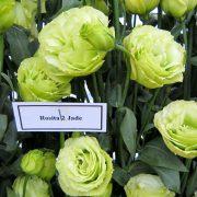 Rosita 2 Jade 3
