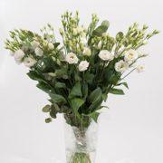 Rosita Pure White 4