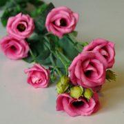 lisianthus-doublini-rose-square