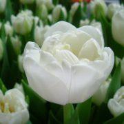 White-Heart-DSCF5523