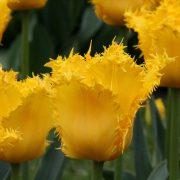 yellow-vallery3